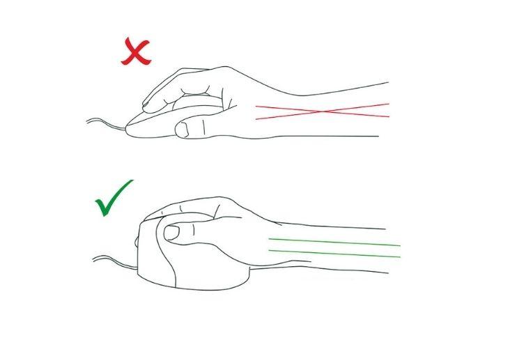 La position neutre de l'avant-bras dessinée
